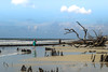 Botany Bay Beach - S.C. (DT's Photo Site - Anderson S.C.) Tags: canon 6d 24105mml lens botany bay edisto island charleston atlantic ocean surf southernlife waves driftwood dead trees coast low country seascape landscape sea