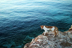 cat blue sea (Katrinitsa) Tags: paros2017 paros greece greekislands sea seaview hill blue cat daylight morning bay cyclades aegean colors water waterscape landscape nature animal mediterranean cats canon canoneosrebelt3i bokeh focus zoom magic dream amazing awesome funny inspiring inspiration relaxing relax summer july art artistic beautiful sunlight travel happy happiness best perfect dreamer rock view watching chasing breathtaking magical beauty cliff nice stunning atmosphere fabulous europe adorable lovely fearless perfection peace sharp unique calmness calm sunshine light shadows