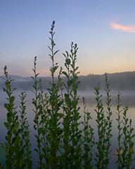 P8033911 (Paul Henegan) Tags: 54cropvertical lakebuel clouds earlymorninglight fog mist reflections sky