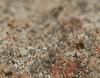 Proboscis down assassin bug in the mould Airlie Beach P1020371 (Steve & Alison1) Tags: micro assassin bug hemiptera aspergillus sp mold trichocomaceae airlie beach growing rotting palm tree stump rainforest