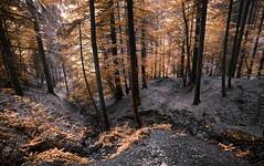 Terra bruciata (ELtano86) Tags: terra bruciata eltano86 tree trees orange arancio alberi bosco bosque forest foresta mountains mountain montagna italy