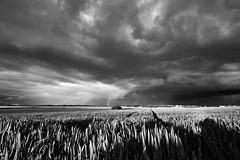out in the fields, after the rain (Guido F.J. Ehlers - gfje) Tags: sonya900 sony landscape sky clouds wolken sunset sonnenuntergang field feld sal1635z rain regen rainbow regenbogen himmel landschaft monochrome