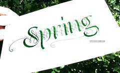 Spring (A L A N A) Tags: calligraphy lettering filamenti spring primavera seasons весна времягода tintex australia flourish colapen typography moderncalligraphy contemporary