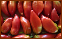 Tomate Poivron Pepper Tomatoes (lobotomyzed) Tags: