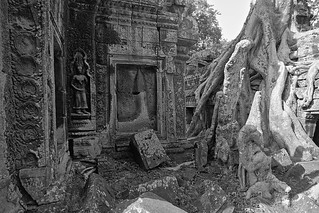 Ruins and Roots