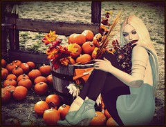 Pumpkin Patch Girl (alexxissvanity) Tags: secondlife sl avatar 3d mesh catwa maitreya izzies pumec zenith pumbynails littlebones fashion style fall outside outdoor pretty gos pumpkins bento beautiful beauty gimp avanity sun sunlight sunny bright