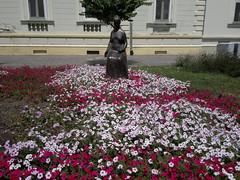 2017-07-17-10166 (vale 83) Tags: petunias flowers zrenjanin serbia nokia n8 friends flickrcolour colourartaward coloursplosion autofocus beautifulexpression