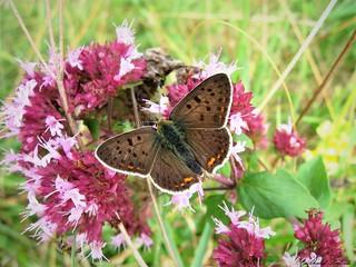 Butterfly 1396
