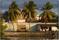 Cuba 2016 - Cienfuegos (Ulster79) Tags: architektur auto haus himmel häuser pflanzen wasser architecture car flora houses oldtimer outdoor palmtree sky street sunlight transportation urban wall water cienfuegos cuba cu