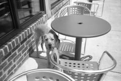 Philadelphia, Pa 7/2017 (kylemorrisseyphoto) Tags: federaldoughnuts nikonl35af nikonl35 nikon pointandshoot toycamera 35mm film bw kodak tmax tmax100 expiredfilm philadelphia pa 2017 hot summer dogsrule neverforget
