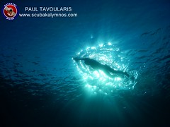 """Kalymnos Diving • <a style=""""font-size:0.8em;"""" href=""""http://www.flickr.com/photos/150652762@N02/36406137516/"""" target=""""_blank"""">View on Flickr</a>"""