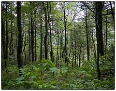 Cherokee picture frame (Steve4343) Tags: nikon d70 d70s cherokee national forest lake watauga iron mountain trail damascus virginia green tree trees woods ironmountaintrail cherokeenationalforest