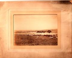 Royal train near Burrelton (possibly). c.1900-10? (Gary Straiton) Tags: burrelton perth strathmore cr caledonianrailway royaltrain