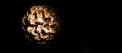 pine cone between lights and shadows (JuanraRBB) Tags: 550d canon arena beach bough branch embranchment landscape naturaleza nature ramas summer verano yongnuo piña cádiz luz sombra loscañosdemeca light shadow pinecone
