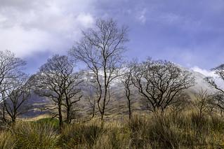 Scenic natural beauty in Glen Coe, Scottish Highlands, Scotland, United Kingdom