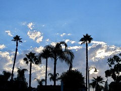 California Sunrise (Bennilover) Tags: dawn morning 630 am park heat heatwave clouds light sky palms california