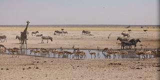 Water Hole Etosha National Park Namibia South Western Africa