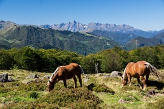 Plateau de Girantès (Ariège) (PierreG_09) Tags: ariège pyrénées pirineos couserans girantès plateaudegirantès coumebière auluslesbains faune cheval estive transhumance valier montvalier