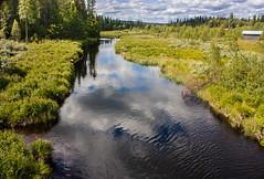 IMG_3048-1 (Andre56154) Tags: schweden sweden sverige wasser water bach river ufer landschaft landscape himmel sky wolke cloud wald forest