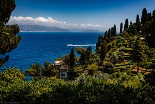 Ligurian