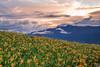 IMG_8085 (Rj Wu) Tags: 台灣 台東 池上 六十石山 金針花 花東縱谷 火燒雲 夕陽 黃昏 雲 天空 山 山谷 植物 太陽 耶穌光 斜射光 霞光 風景 日落