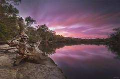 Stump (Tibro & Co) Tags: river bend mooloolahriver sunshinecoast sunset colours water queensland australia stump lomgexposure leefilters 10stopper
