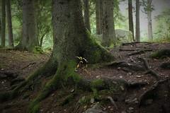 Erosion (Annica Spjuth) Tags: fotosondag erosion fs170917 skog rötter
