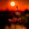stem the flow (Just Ron ;)) Tags: macro sunset imageron tokina nikon güneş light red nature bokeh