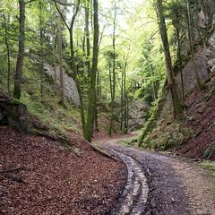 Jura Höhenweg, tief eingeschnitten (zeh.hah.es.) Tags: ktsolothurn jura jurahöhenweg schweiz switzerland weg path road rot red rotbraun grün green wald forest bäume trees kurve turn arc einschnitt