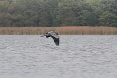 aIMG_9911 (hottmoose) Tags: darlingtonprovincialpark ontario crane birds wildlife nature