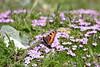 DSC_1434 (d90-fan) Tags: rauris raurisertal hohetauern nationalpark npht salzburgerland österreich austria nature alps alpen mountains gebirge animals