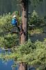 EOG-15.jpg (Joel Spooner Photography) Tags: arblife arborist bc expeditionoldgrowth joelspooner joeliphoto climbtrees exploretrees explorebc inspire learntoclimb oldgrowth treeclimbing
