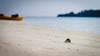 A crab's life (marco sees things) Tags: maldives hermitcrab compellingframe crabparadise crab canon5dmk4 paradise crablife sandbank peaceful honeymoon