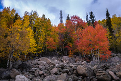 Autumn Gradient (Ash and Debris) Tags: wood autumn usa rockymountain nature nationalpark fall stones clouds trees contrast tree forest sky colorado colors park unitedstates woods rockymountainnationalpark view