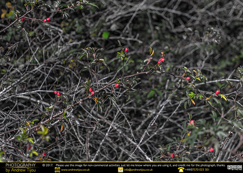 Bush Variations 1