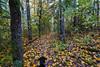 Cortana - Bear Head Hike (Tony Webster) Tags: autumncolors bearheadlakestatepark cortana minnesota norberglake september autumn dog fall fallcolors fallfoliage foliage hike hikingtrail trail ely unitedstates us