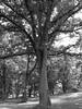 Tree (Berggren81) Tags: hasselblad hasselbladdigital h2d hassy phaseone phaseonep30 digitalback mediumformat digitalmediumformat
