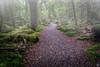 Rainforest - New Zealand (John_Armytage) Tags: fog rain moss rainforest landscape nz newzealand milfordsound sonya7r2 sony1635 sonyaustralia johnarmytage
