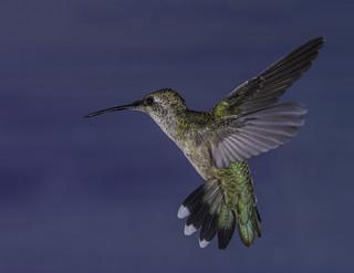 The Nectar Hunter