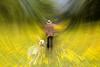 187 (robwiddowson) Tags: meadow buttercups digital art robertwiddowson digitalart dogwalking dogwalker dog walker waling summer hat man lone blur extrude composite photo photograph photography image picture nature natural yellow