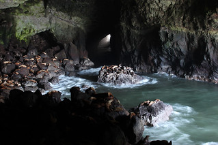 Sea Lion Caves