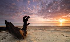 Pantai Bisikan Bayu (Md Farhan's Gallery) Tags: beach beautiful kelantan malaysia pantaibisikanbayu pasirputeh wood dead sunrise nationalgeographic landscape sea seascape ocean cloud sky skyview fujifilm fujinon xf1024mm ray raymaster xt1