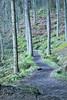 1305.Landscapes,Trees (ronniefleming@btinternet.com) Tags: trees balmaha scotland woodlandwalks