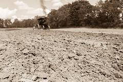 2017 Mason Tractor -134 (Michael L Coyer) Tags: masontractorshow tractorshow steam engine threshers clubmichigan club michigansteamenginethreshersclub michigansteamengineandthreshersclub steamengine tractor farm farmer farming field agriculture plowing husbandry antique