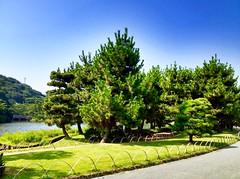 夏の庭園 (hamapenguin) Tags: japan kanagawa yokohama garden 横浜 三渓園 apple iphone