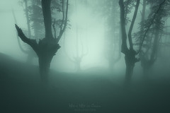 Sleepy Hollow (Mimadeo) Tags: mood forest horror mystery spooky scary fog trees tree mist fantasy misty landscape light magic evil foggy fear nightmare woods ghost silhouette gloomy enchanted creepy mysterious surreal trunk monochrome dark