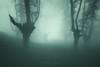 Sleepy Hollow (Mimadeo) Tags: mood forest horror mystery spooky scary fog trees tree mist fantasy misty landscape light magic evil foggy fear nightmare woods ghost silhouette gloomy enchanted creepy mysterious surreal trunk monochrome dark
