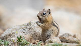 Ewww!  That wasn't a piñon nut!