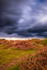 The End Of Summer (collins.photographyuk) Tags: sky landscape clouds stormy stormclouds moody sunlight heather heath heathland sutton suttonheath suffolk countryside canon canon6d 6d fullframe tamron 10stop ndfilter tripod lightroom naturallight