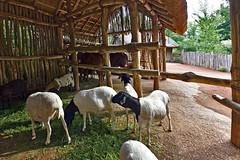 StillLeben (Michael Döring) Tags: gelsenkirchen bismarck zoomerlebniswelt zoo stillleben afs815mm3545efisheye d800 michaeldöring